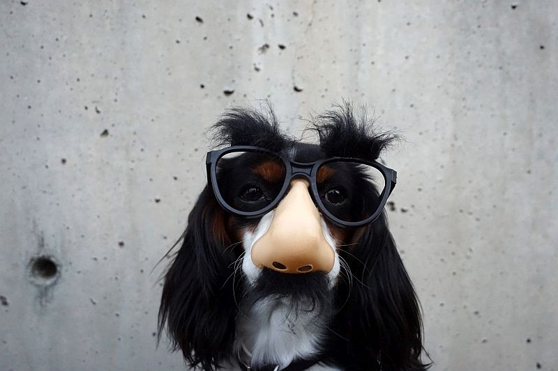 dog-wearing-funny-mask-with-glasses