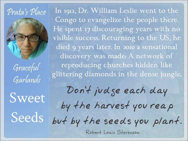 Prata Place Graceful Garlands seeds