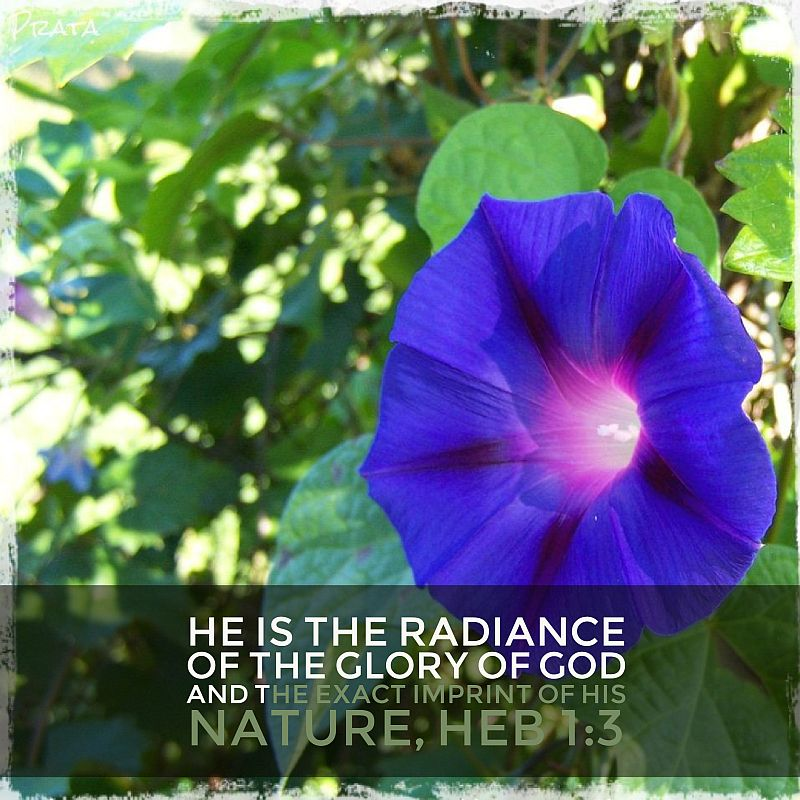 morning glory imprint radiance verse
