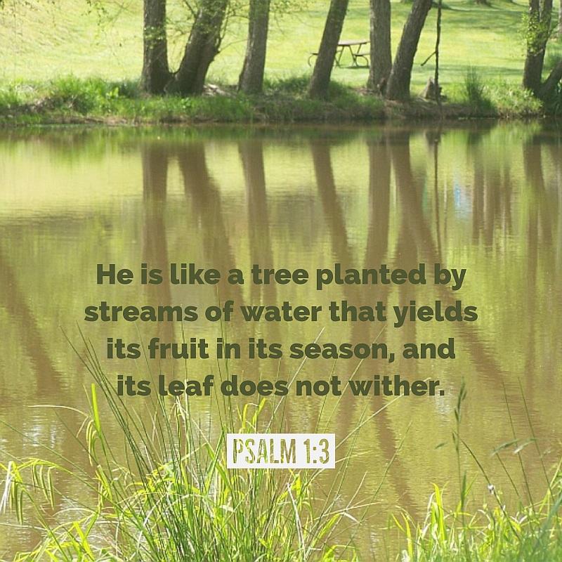 psalm 1 wed verse