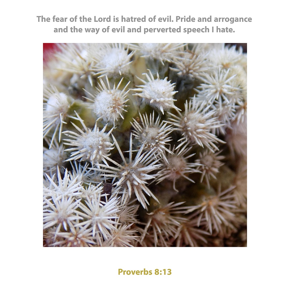 prickly 2