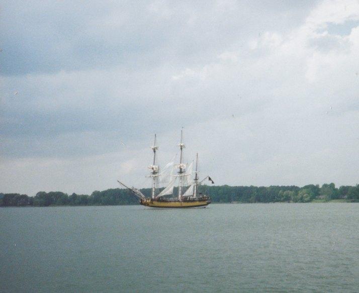 ship rose