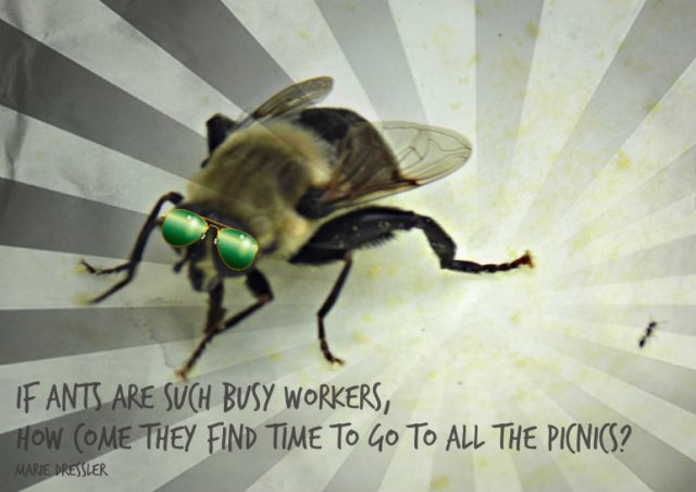 busy bee and ant