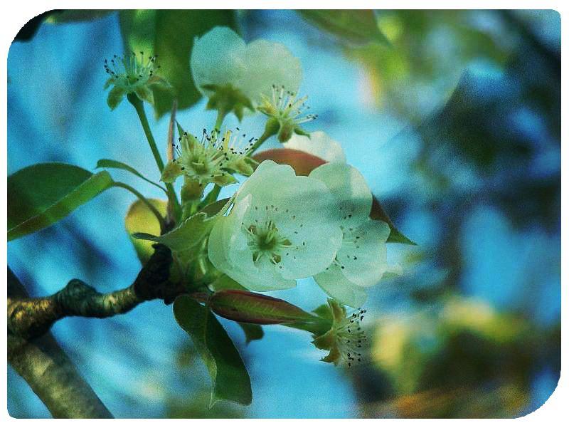 flowers pixlr