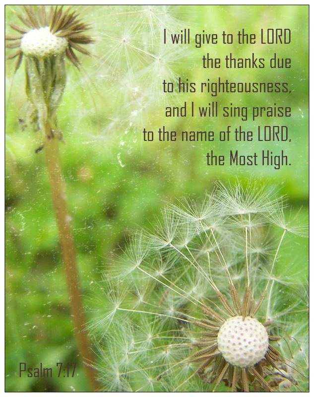 dandelion milkweed verse