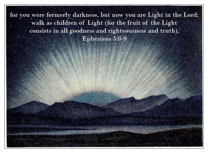 fruit of the light