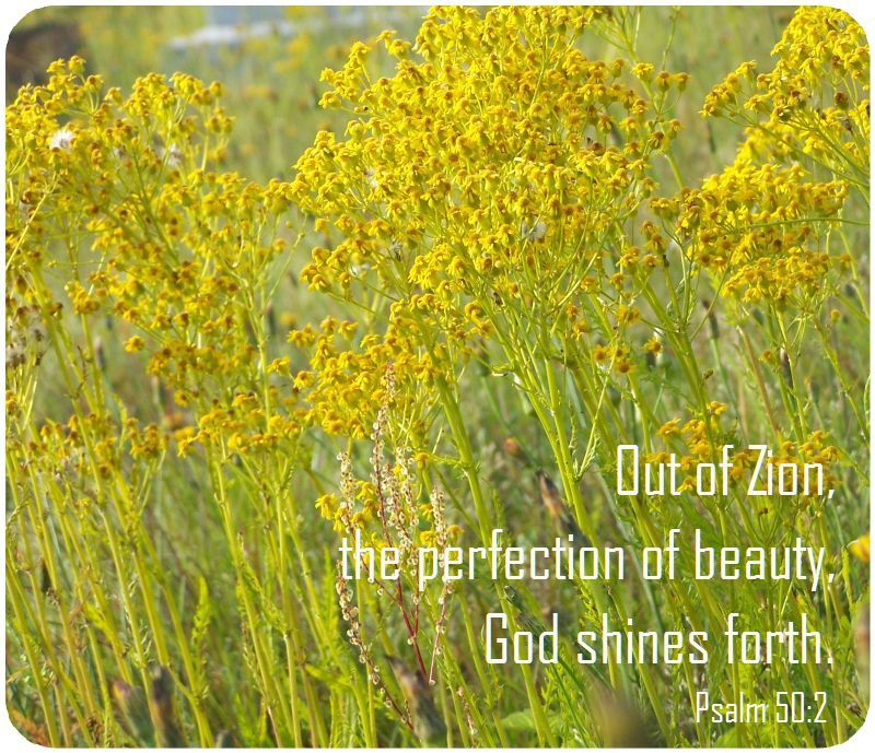 perfection of beauty shines verse
