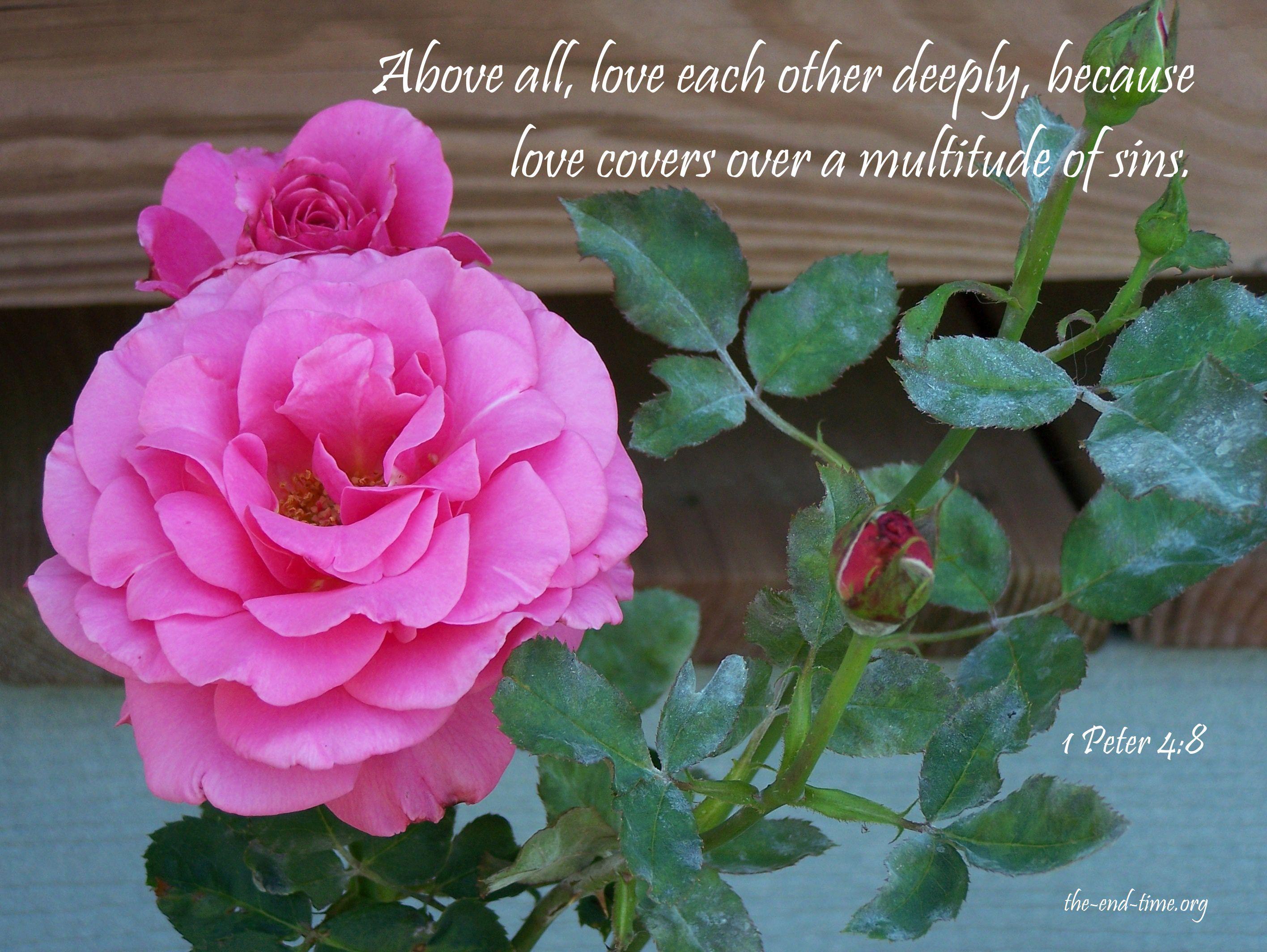 love verse 4