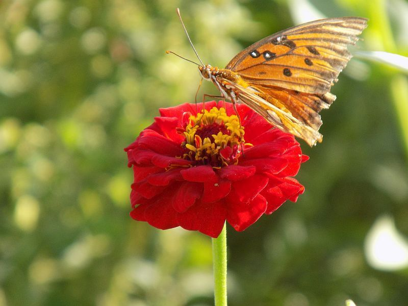 butterfly 5