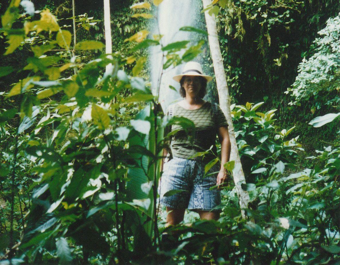 amazon rainforest1