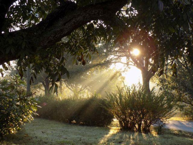 sunshine beams in yard