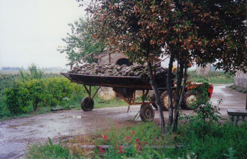 tuscan artichoke wagon.jpg