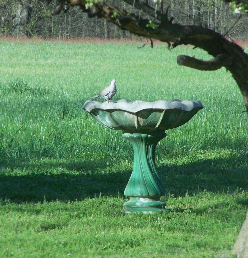 blog bird bath