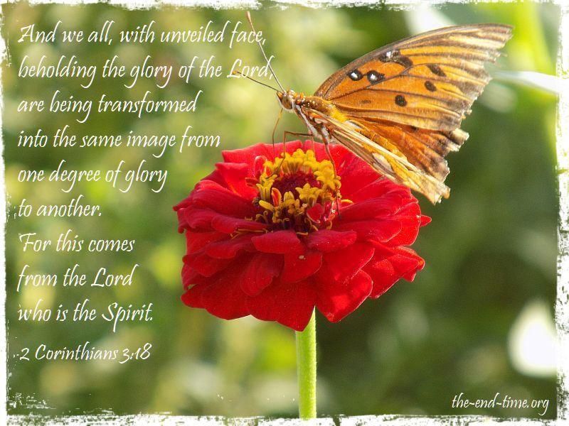 butterfly 5 verse