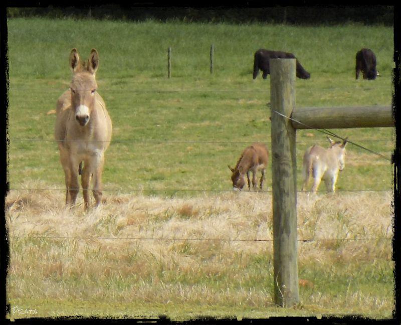 donkey 2ab