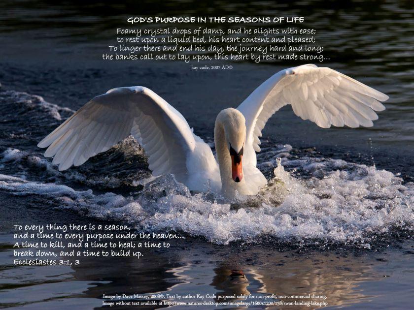 Swan landing on a lake